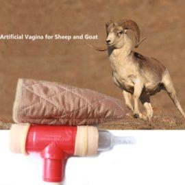 Vagina Artificial para Colectar Semen fresco de Ovinos
